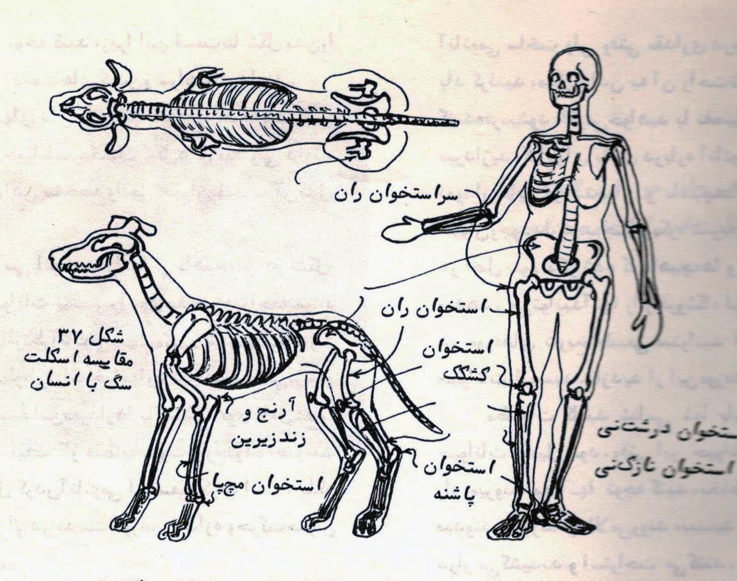 سفال نقش برجسته حیوانات